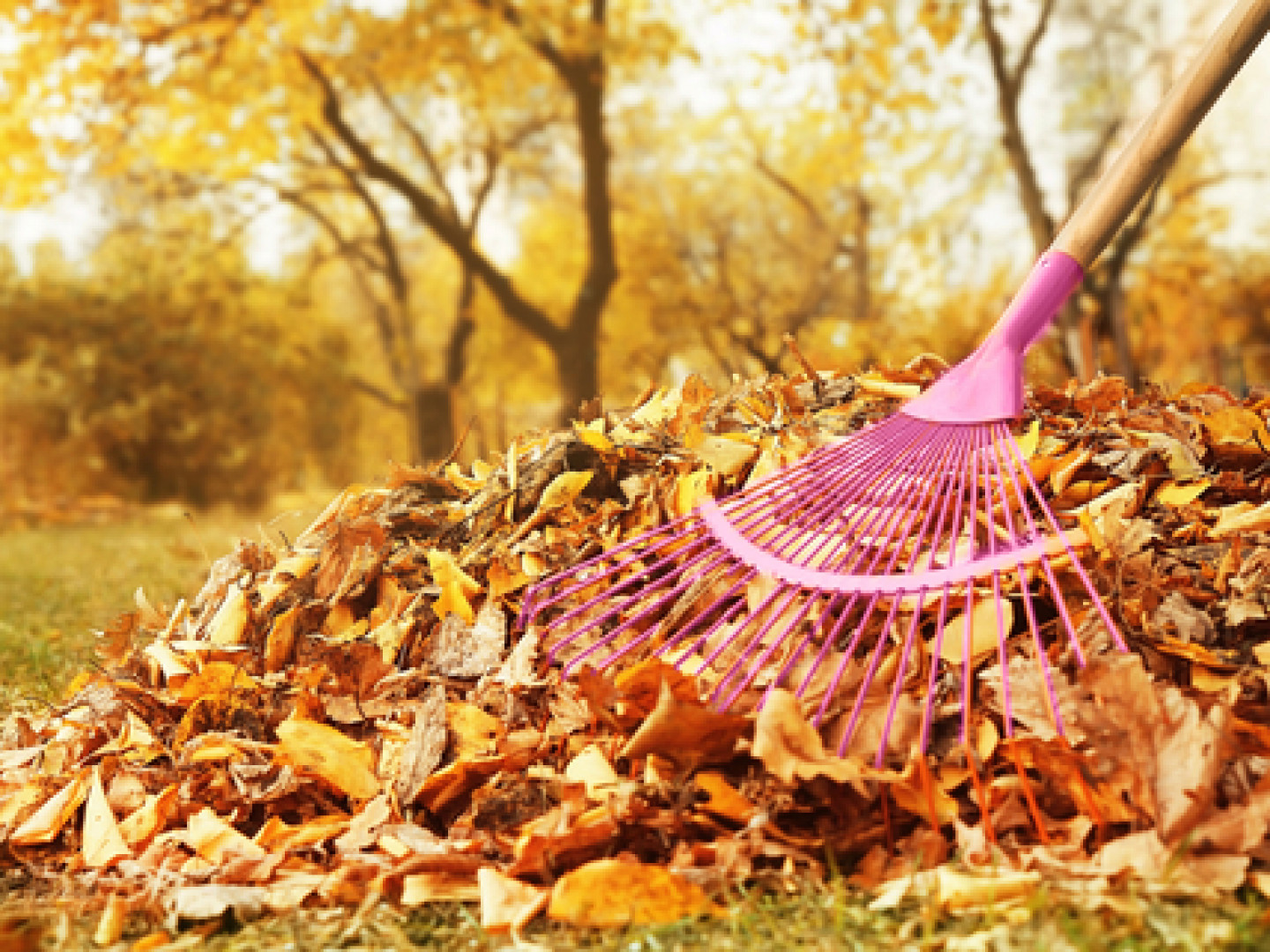 Eliminate unsightly leaves
